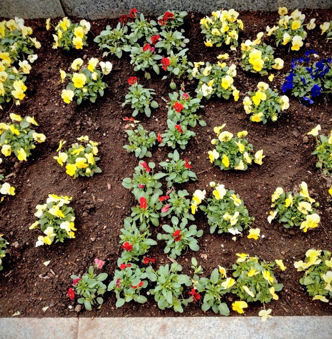 花壇にメッセージ「せかいは1つ」