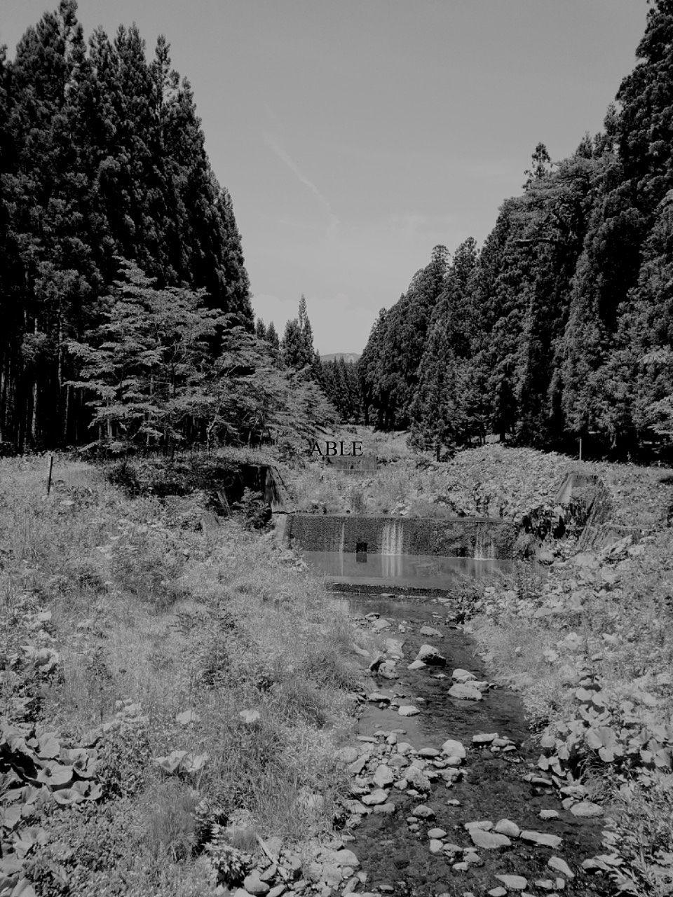 神山の秘水と夫婦杉