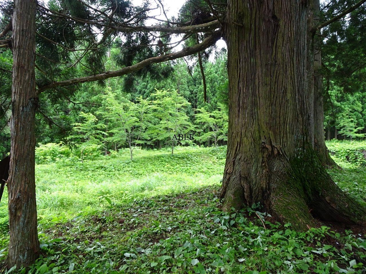 森林浴でリラックス