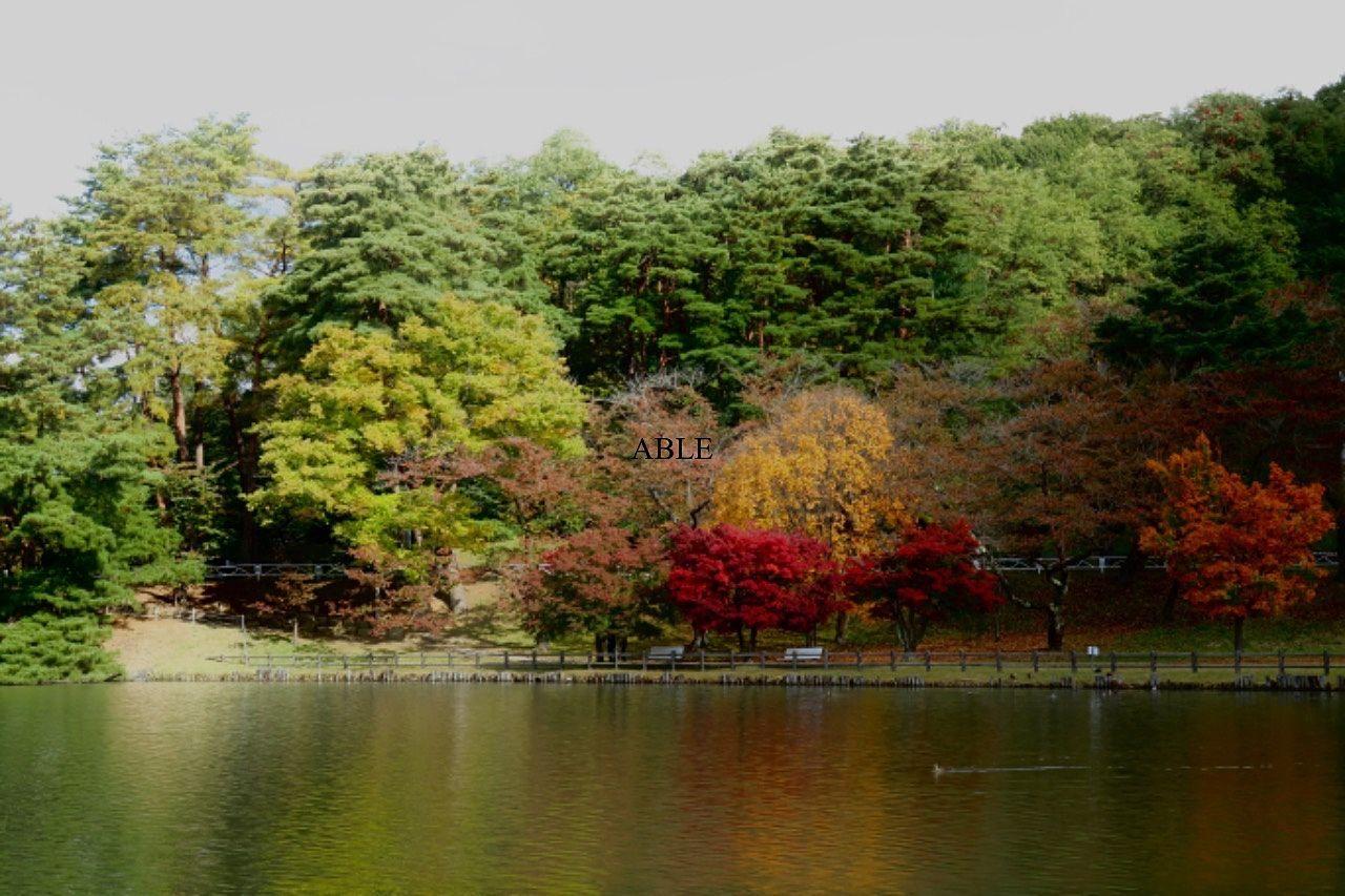 紅葉だより…盛岡・高松の池