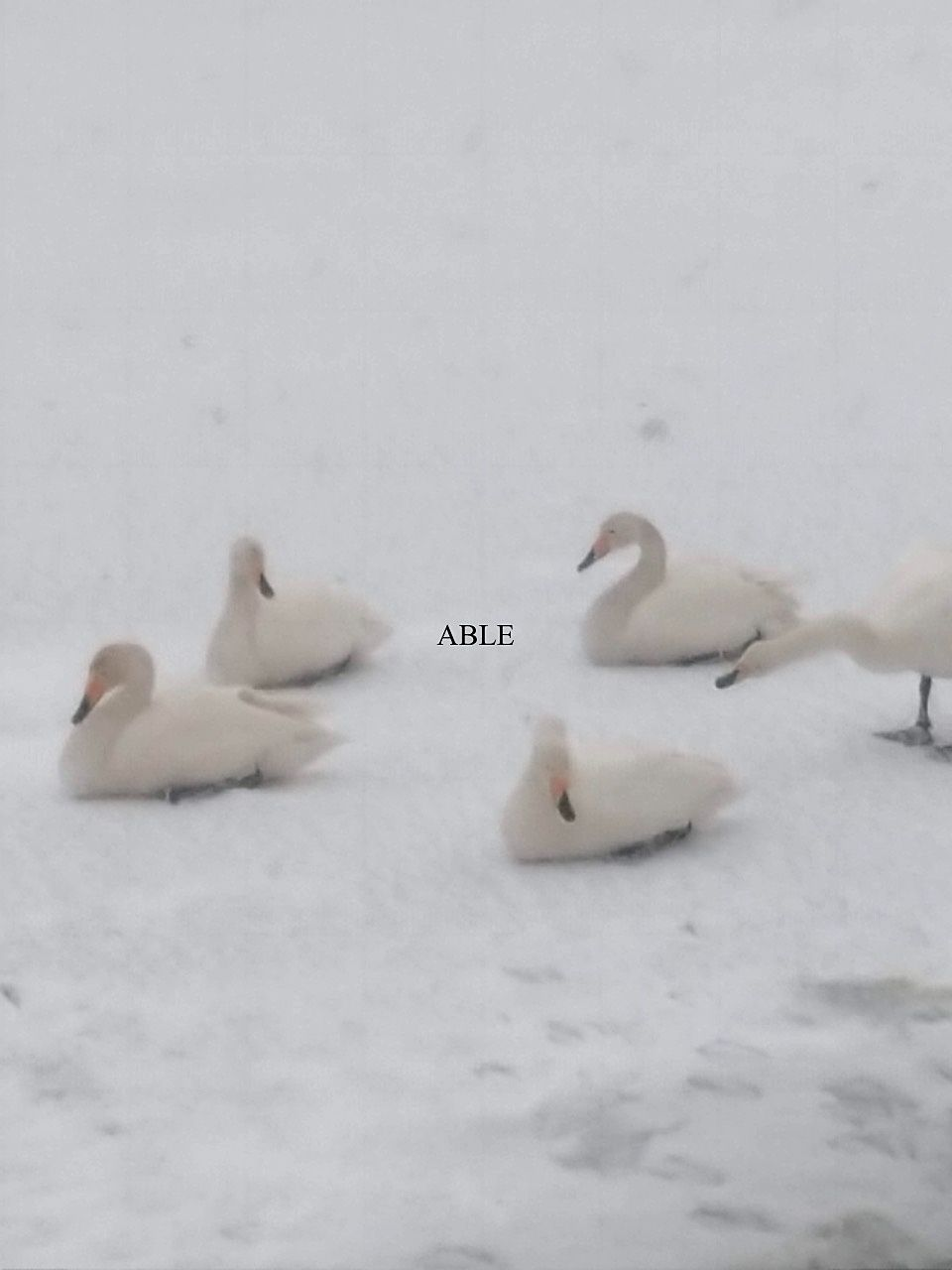 四角い氷の上で(もりおか高松の池)