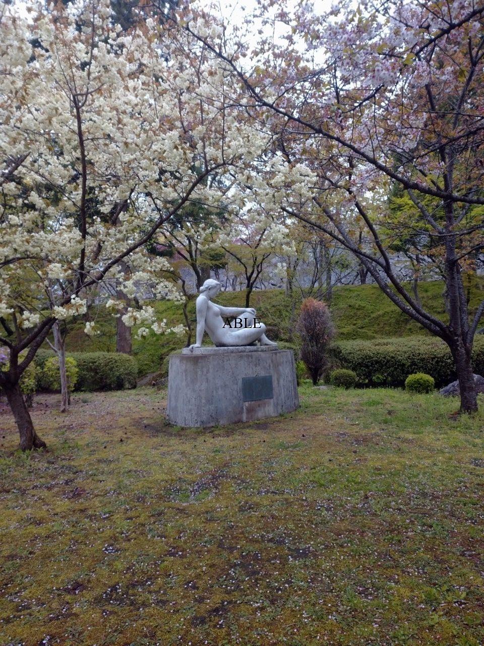 サトザクラが見頃です!盛岡城跡公園