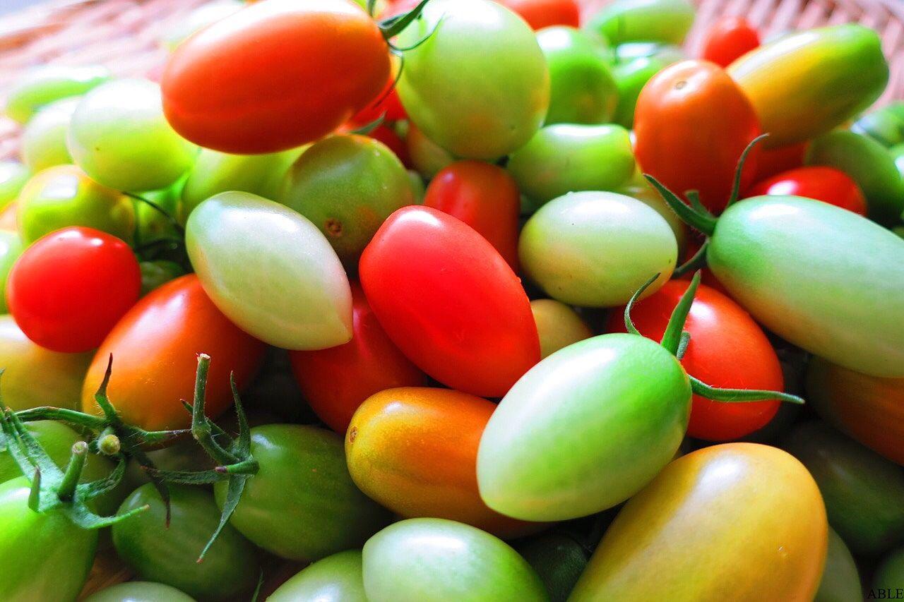 青トマトと赤トマト